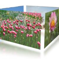Стоковые изображения - цветы и деревья